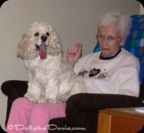 Taffy companion dog - dog jobs