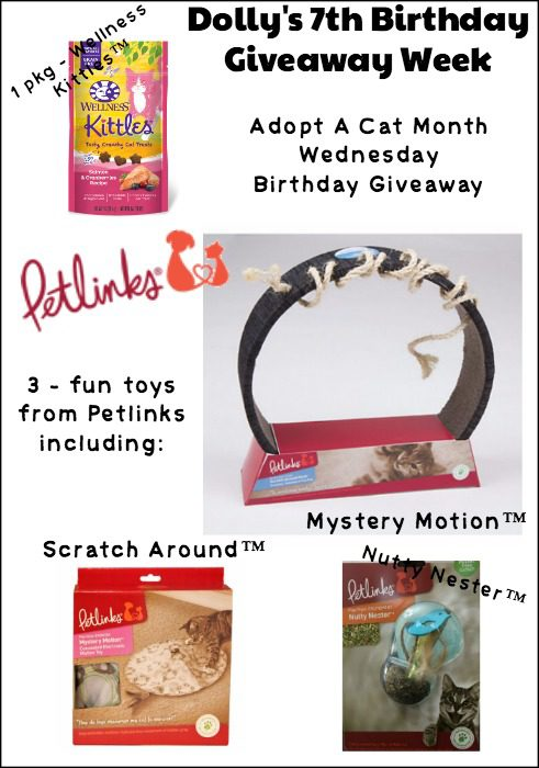 Adopt A Cat Month Birthday Giveaway