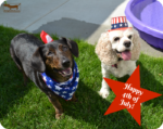 How to Dog Proof Your Back Yard for 4th of July Fun
