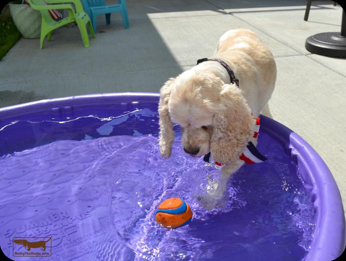 Dog Proof Yard 4th of July Fun