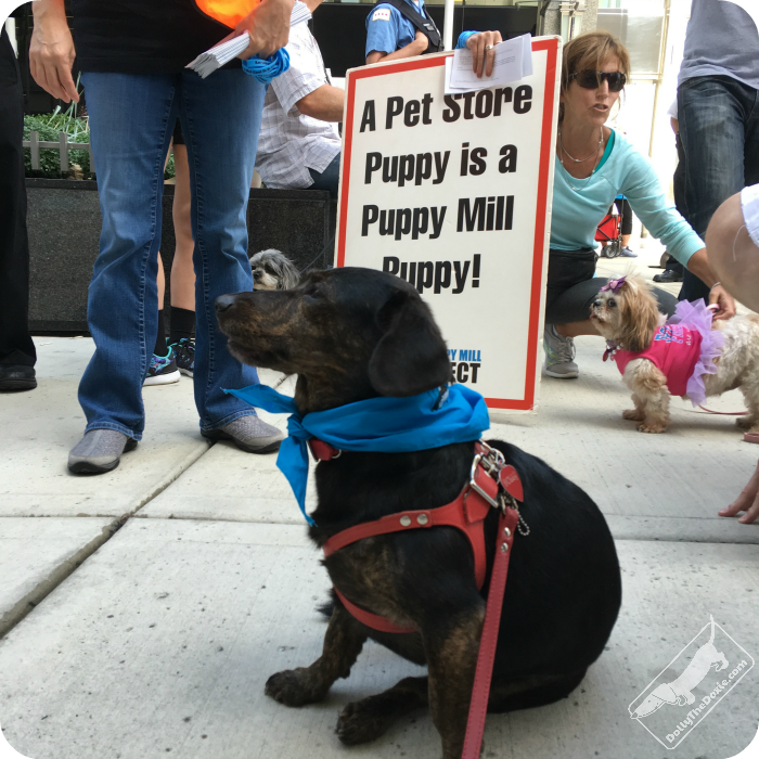 Septembers favorite things - puppy mill awareness