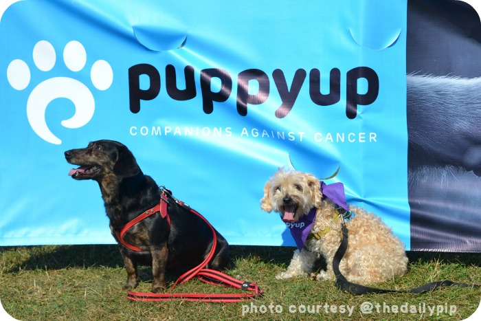 Puppy Up Chicago Inaugural Walk Funds Canine Cancer Research