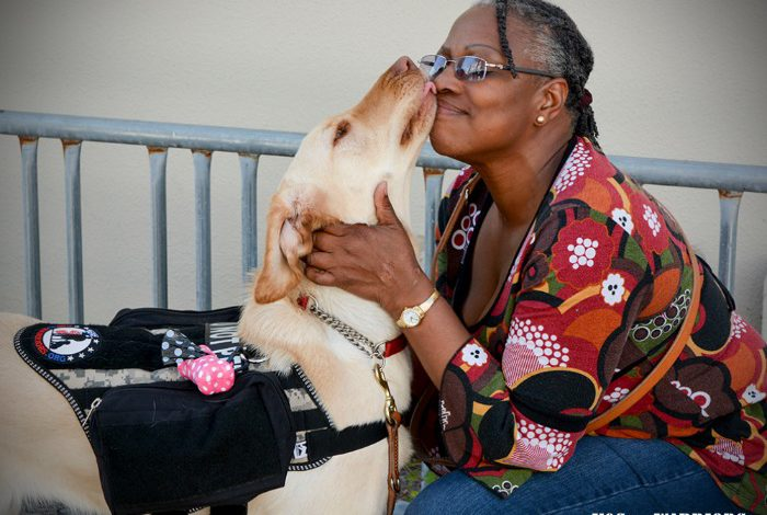 What Can Service Dogs Do for Today's Veterans