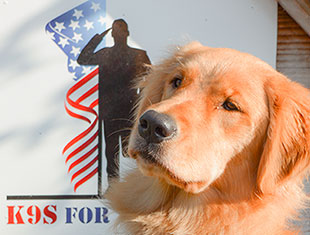 What do service dogs do K9s for Warriors