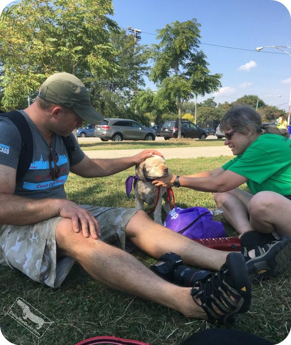 Puppy Up Chicago walk to fight canine cancer