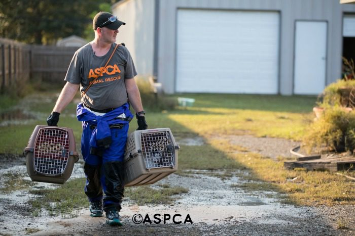 ASPCA hurricane rescues