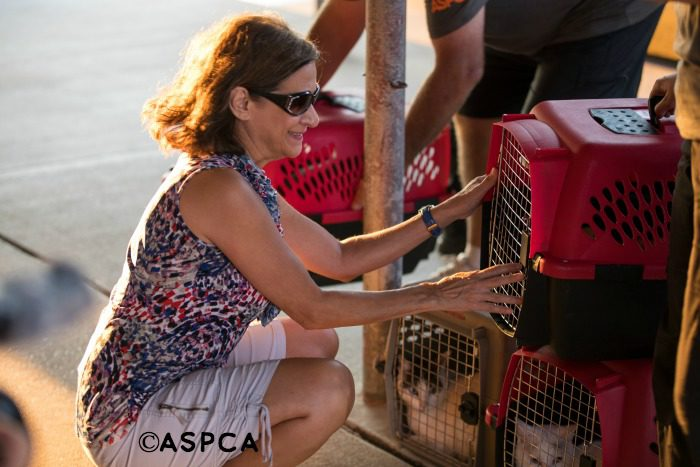Reunion at ASPA shelter after Hurricane Harvey