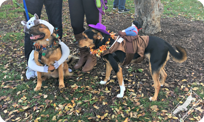 fun things to do with your dog for Halloween