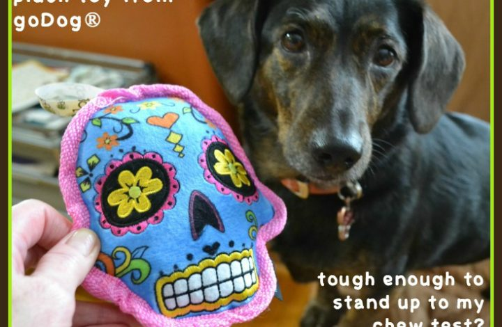 Are These New Tough Dog Toys Indestructible — Dolly Puts Them To the Test #ad