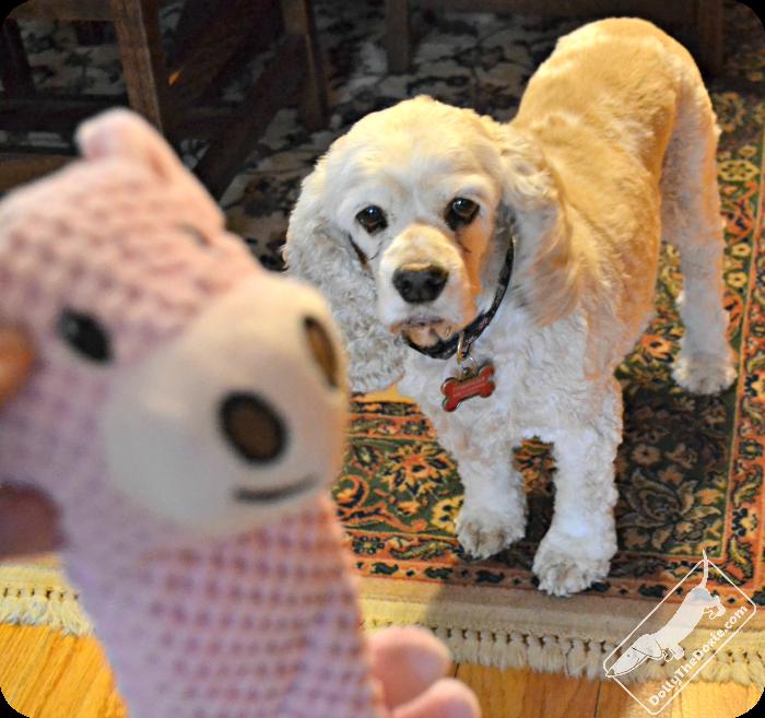 tough dog toys, indestructible