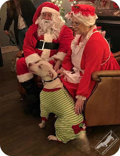 real dog mom to pitbull