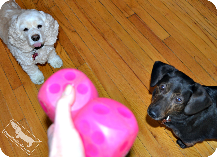 indoor games for dogs