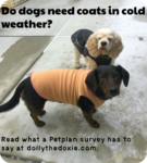 do dogs need coats in winter