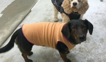 Do Dogs Need Coats in Cold Weather?